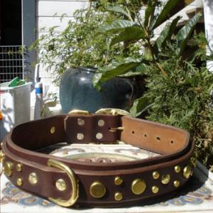 paco dog collar pbrc