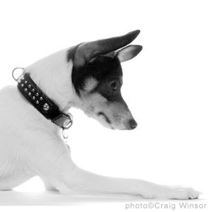 paco dog collar patrick