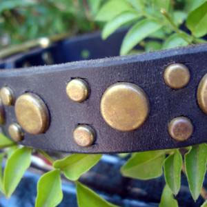 paco dog collar pickles