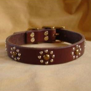 paco dog collar callie