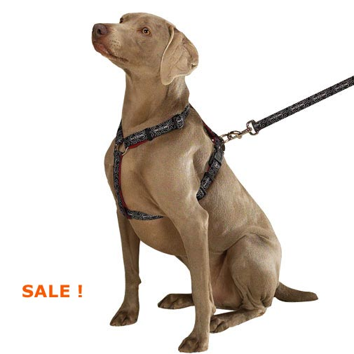 cheap bad to the bone dog harness, sale