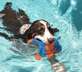 spring spaniel swimming waterproof dog collars